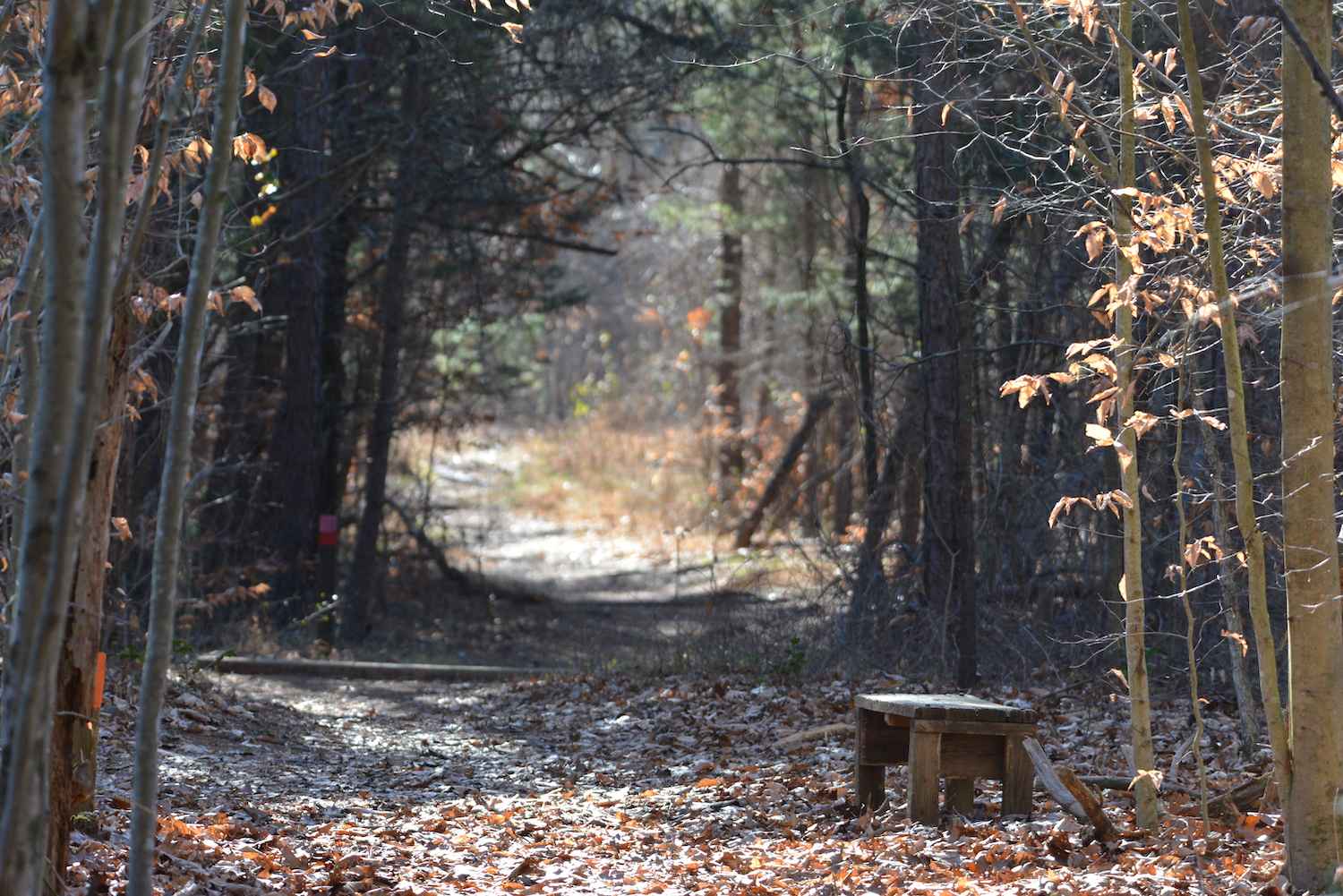Trail with rustic bench