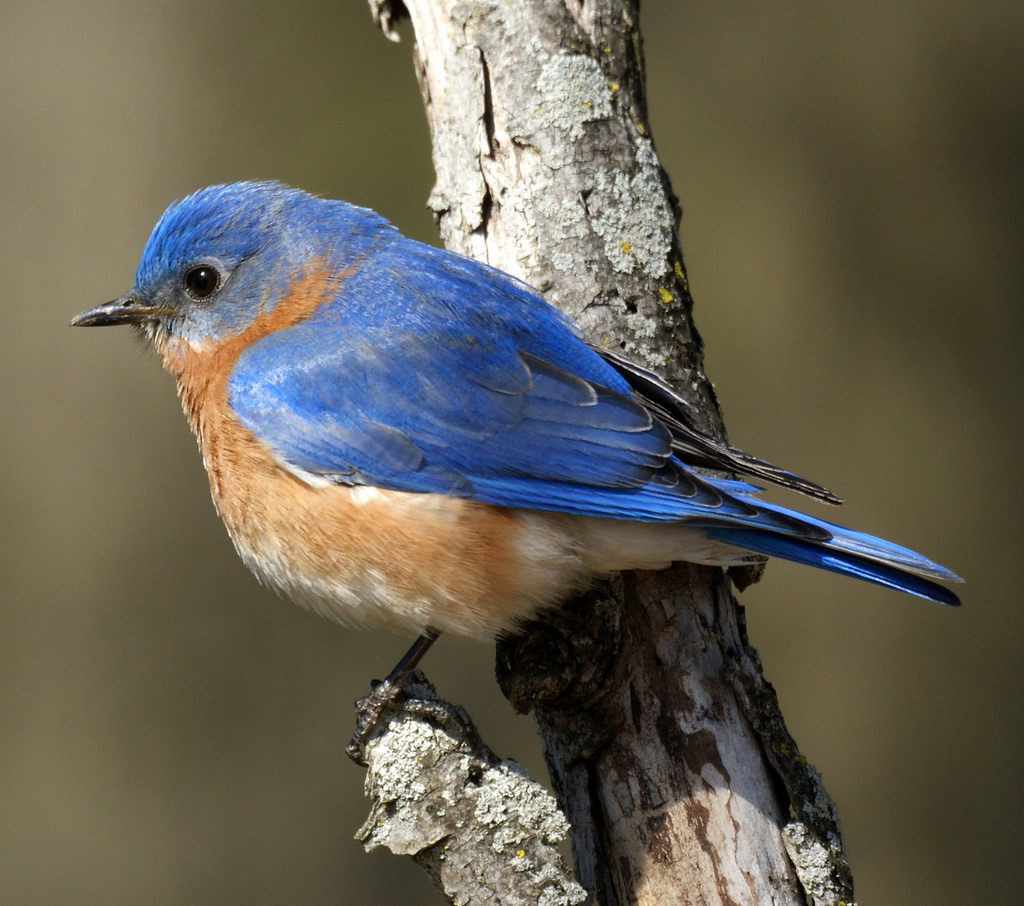 North Trail -Bluebird