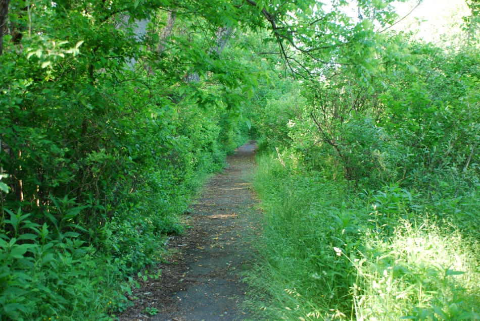 Trail in Spring